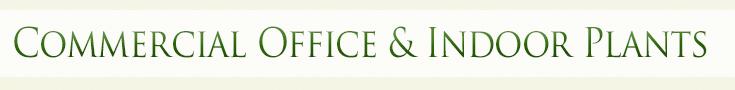 Commercial Office & Indoor Plants