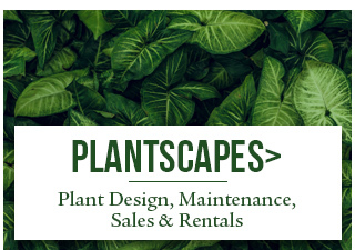 Office Plant Rentals and Maintenance Sarasota