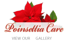 Learn the proper methods for taking care of your Poinsettia Plant.