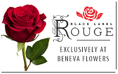 For over 25 years Beneva Flowers has been recognized for our signature rose, the Rouge.