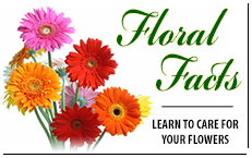 Read about your favorite cut flowers.