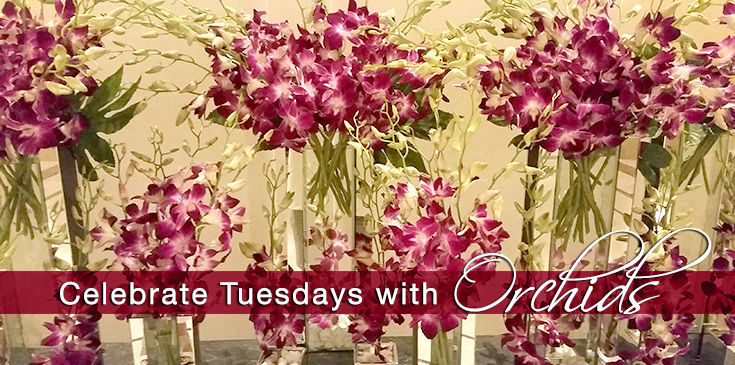 $20 Tuesday orchids